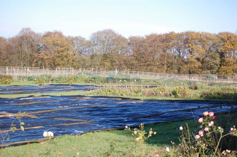 Black matting mulch (1 of 1)