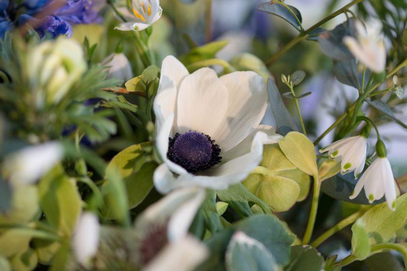 Anemone detail in  Bouquet