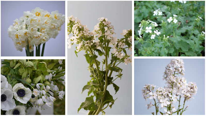 April Gypsophila alternatives
