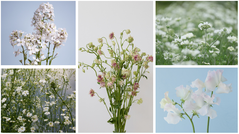 May Gypsophila alternatives