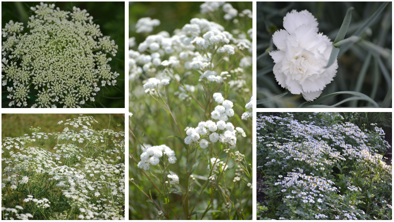 July Gypsophila alternatives