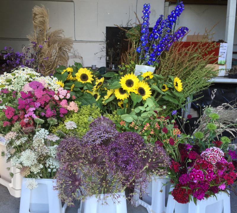 Hampton Court flowers to go