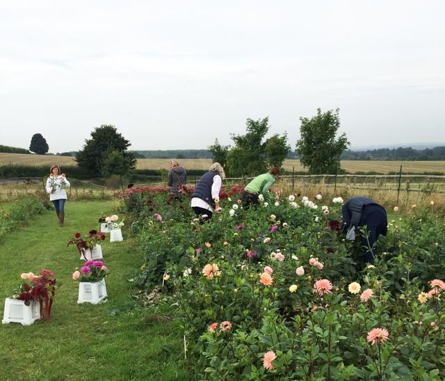 Florists picking