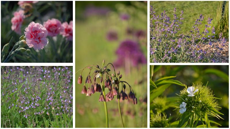 June scent montage