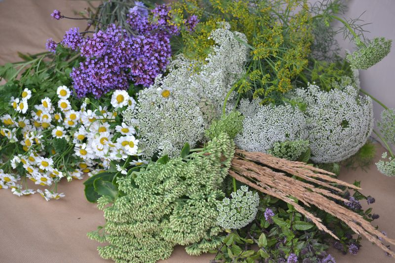 Fillers for august meadow flowers