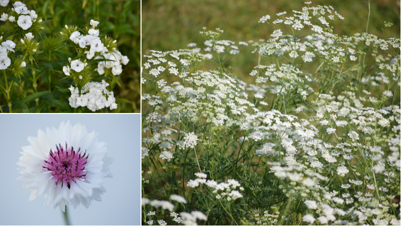 June Gypsophila alternatives