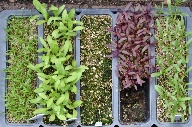 Full of seedlings