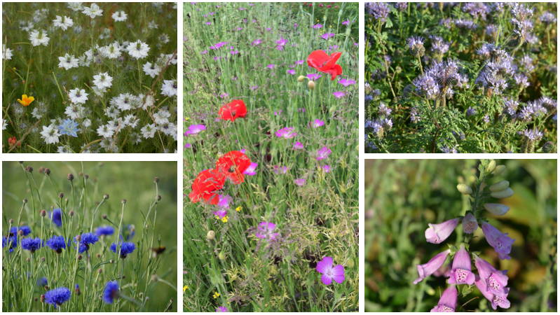 Meadow style wildflowers montage may june