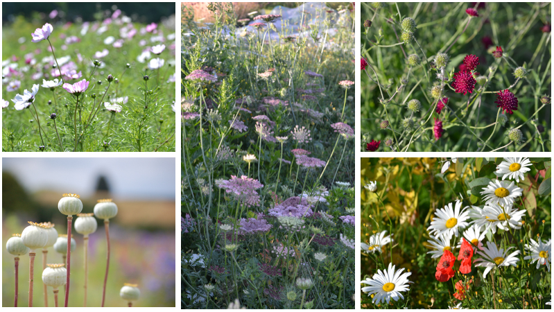 Meadow style wildflowers montage September