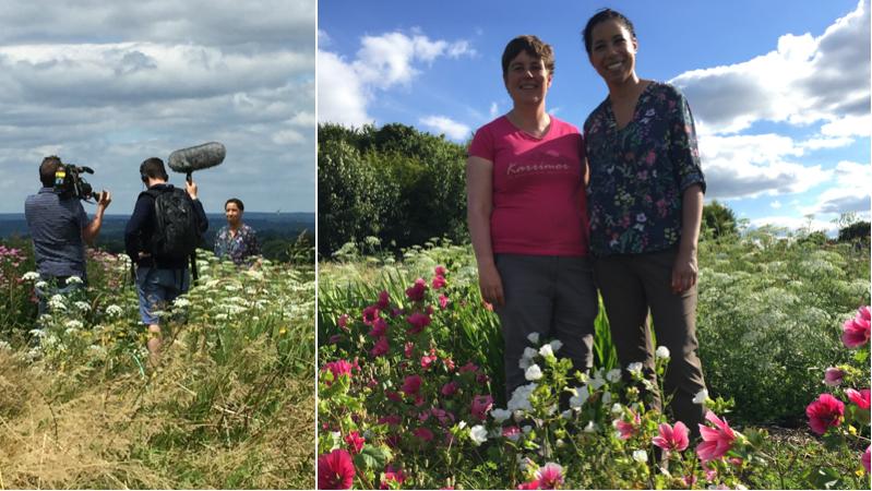 BBC filming at my field