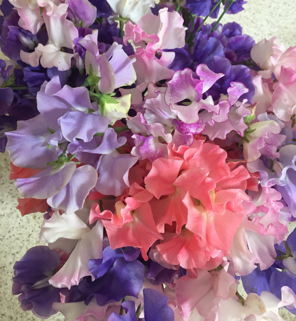 Bright summer sweet peas