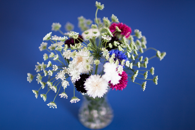 Simple ammi and cornflowers arrangement